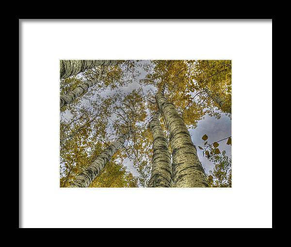 Popular Framed Print featuring the photograph Golden Trees Summer by Linda Rich