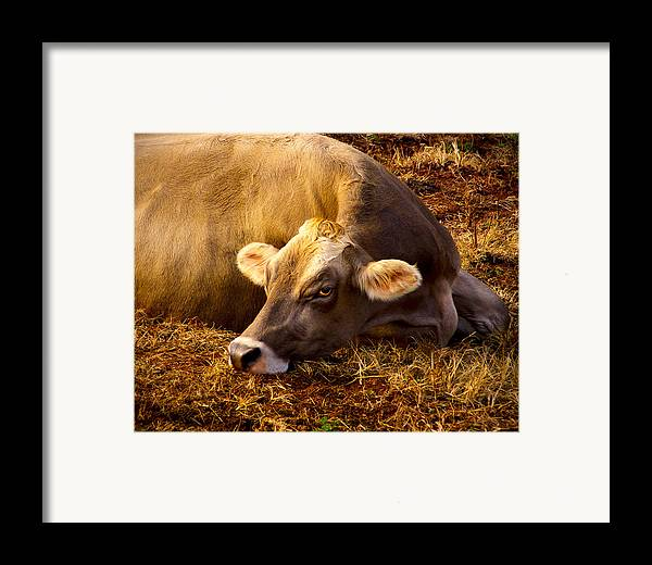 Swiss Browns Framed Print featuring the photograph Goldeneye by Robert Geary