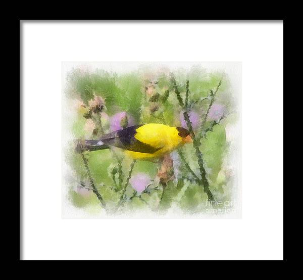 Goldfinch Framed Print featuring the photograph Goldfinch #3 By Kerri Farley by Kerri Farley