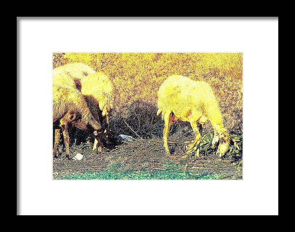Sheep Framed Print featuring the photograph Good Food Is Hard To Find, But We Never Stop Searching by Hilde Widerberg