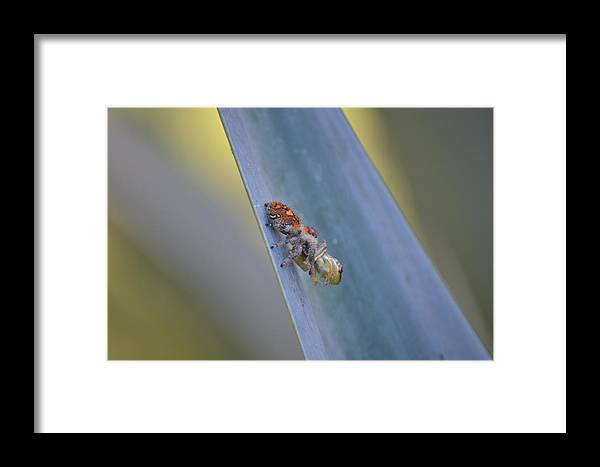 Framed Print featuring the photograph Good Frog Lages by Katrina Johns