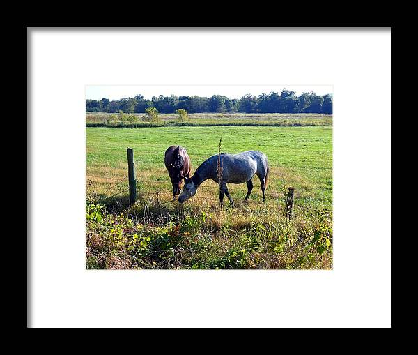 Horses Framed Print featuring the photograph Good Stuff by Wild Thing
