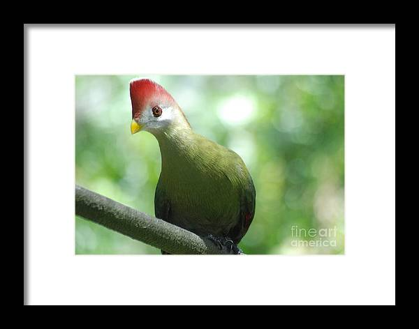 Wildlife Framed Print featuring the photograph Got Treats by Tom Williams