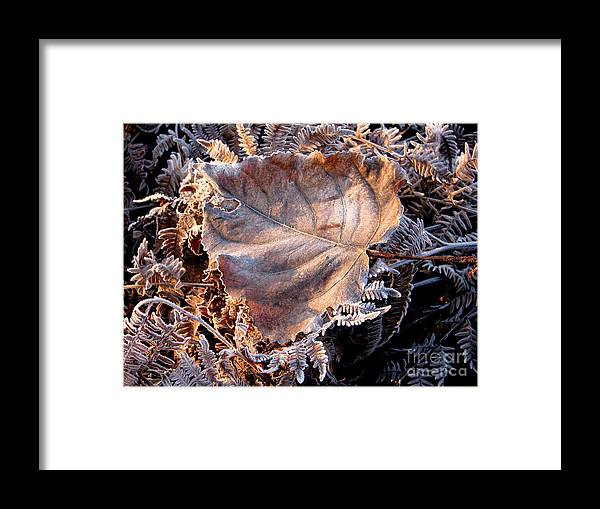 Fall Framed Print featuring the photograph Graced By Frost by Rory Sagner