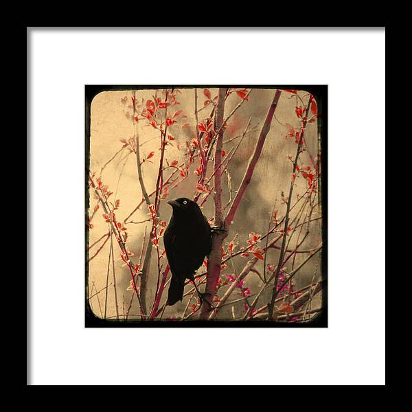 Bird Framed Print featuring the photograph Grackle On Branch by Gothicrow Images