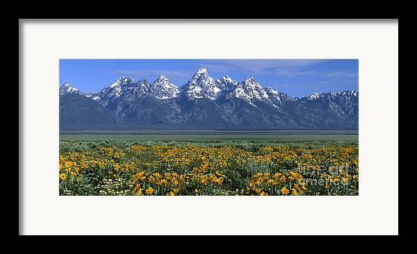 Grand Teton Framed Print featuring the photograph Grand Teton Summer by Sandra Bronstein