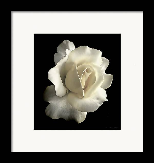 Rose Framed Print featuring the photograph Grandeur Ivory Rose Flower by Jennie Marie Schell