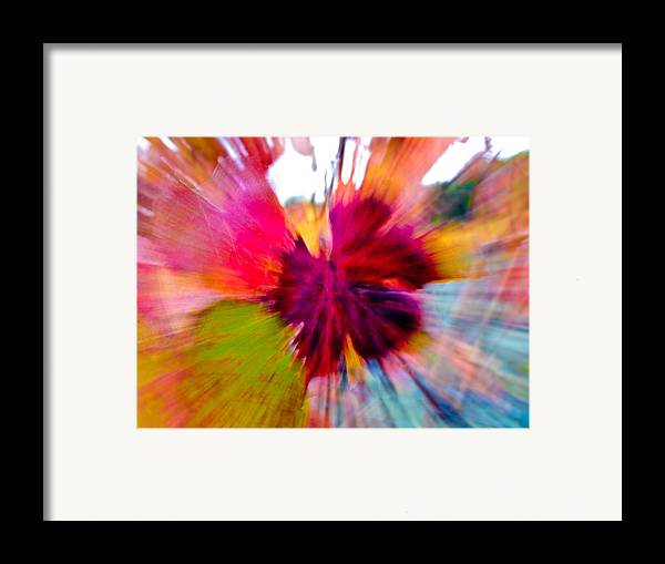 Grapevine Framed Print featuring the photograph Grape Vine Burst by Bill Gallagher