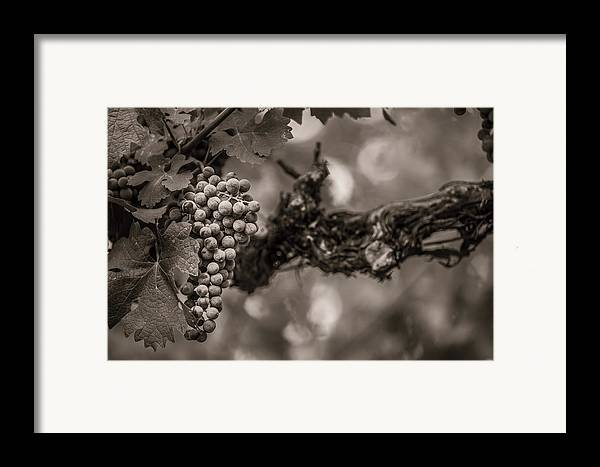 Fine Art Framed Print featuring the photograph Grapes In Grey 1 by Clint Brewer