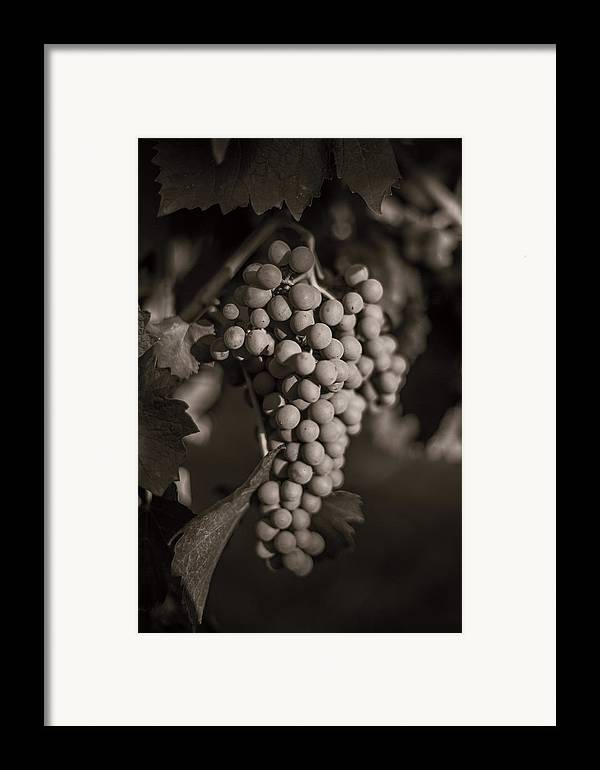 Fine Art Framed Print featuring the photograph Grapes In Grey 2 by Clint Brewer