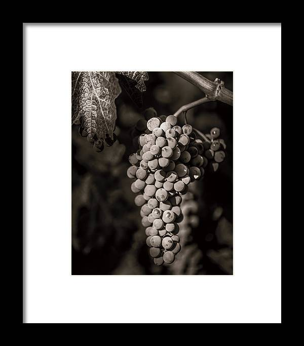Fine Art Framed Print featuring the photograph Grapes In Grey 4 by Clint Brewer