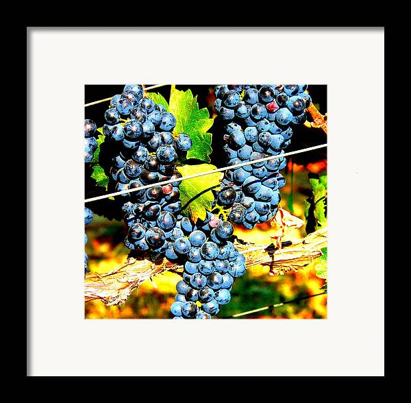 Grapes Framed Print featuring the photograph Grapes On The Vine by Kay Gilley