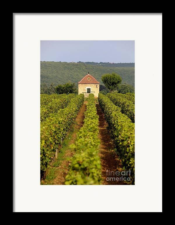 Architectures  Framed Print featuring the photograph Grapevines. Premier Cru Vineyard Between Pernand Vergelesses And Savigny Les Beaune. Burgundy. Franc by Bernard Jaubert