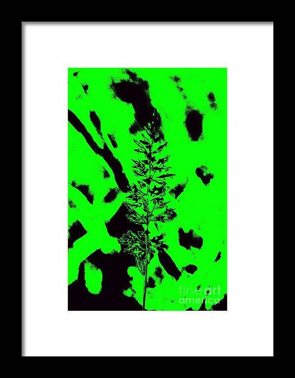 Green Grass Framed Print featuring the digital art Grass Bloom Variations 6 by John Le Brasseur