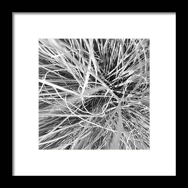 Grass Framed Print featuring the photograph Grass by Christy Beckwith
