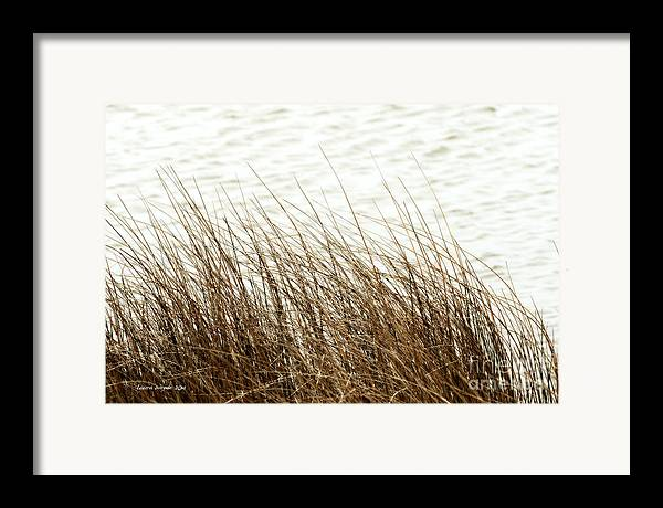Shore Of Virginia Beach Framed Print featuring the photograph Grass Down By The Shore Of Virginia Beach by Artist and Photographer Laura Wrede