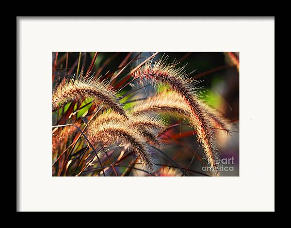 Grass Framed Print featuring the photograph Grass Ears by Elena Elisseeva