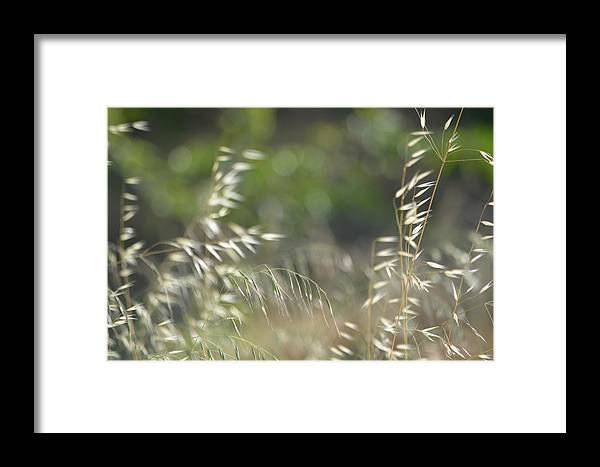 Framed Print featuring the photograph Grassland by Beth Sanders