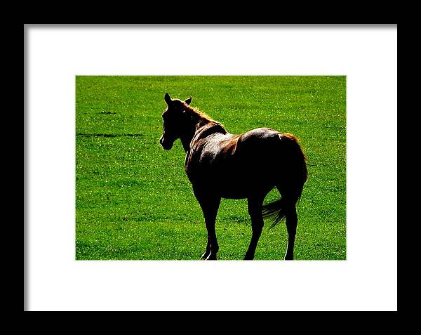 Green Framed Print featuring the photograph Grassland by Diana Child