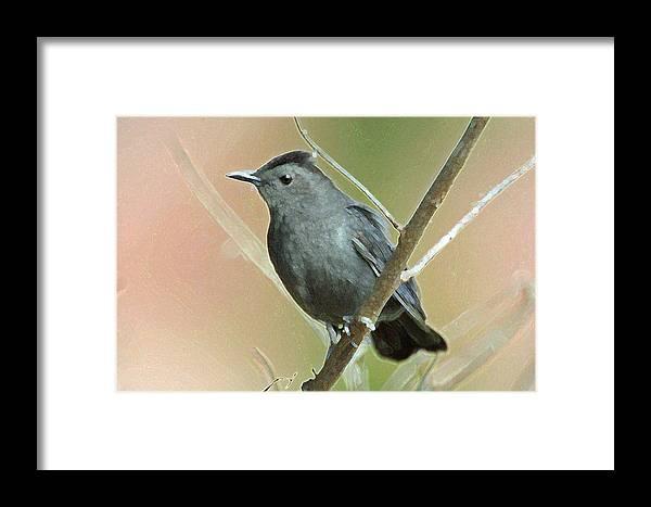 Bird Framed Print featuring the photograph Gray Catbird by Bob Richter