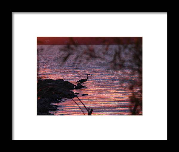 Heron Framed Print featuring the photograph Great Blue Heron by Helen ONeal