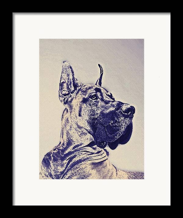 Great Dane Framed Print featuring the digital art Great Dane- Blue Sketch by Jane Schnetlage