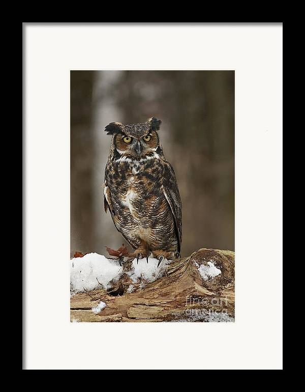Great Horned Owl Watching You Framed Print featuring the photograph Great Horned Owl Watching You by Inspired Nature Photography Fine Art Photography