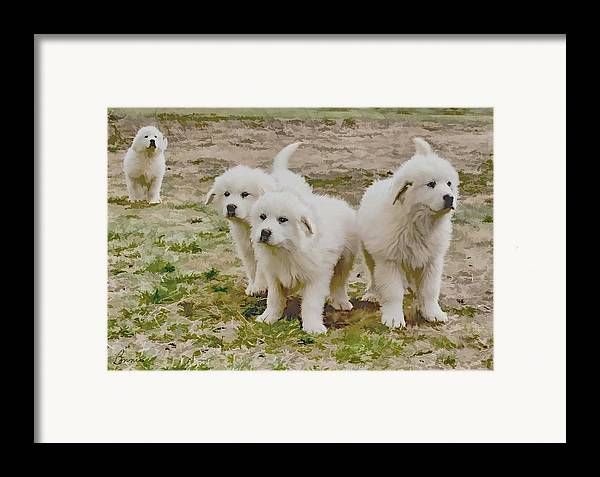 Pyranese Puppies Framed Print featuring the photograph Great Pyranese Puppies by Bonnie Willis
