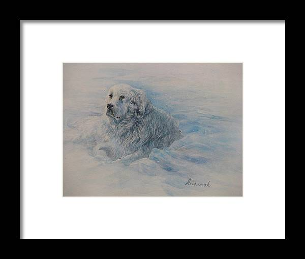 Great Pyrenees Dog Framed Print featuring the painting Great Pyrenees Dog by Ursula Brozovich
