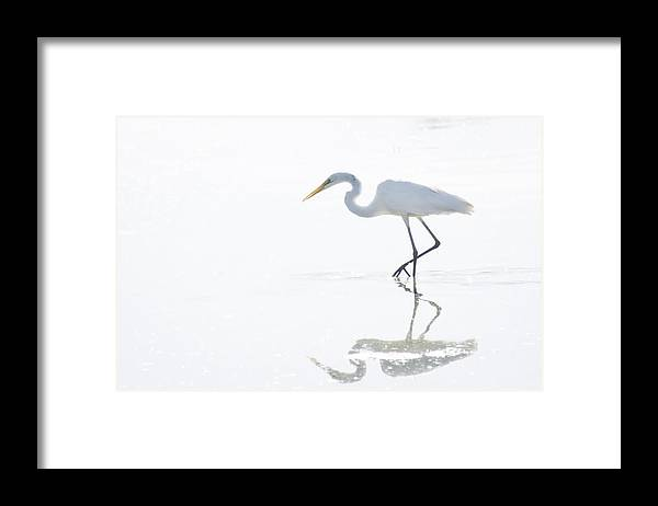 Great Egret Framed Print featuring the photograph Great White Egret Reflection by Saija Lehtonen