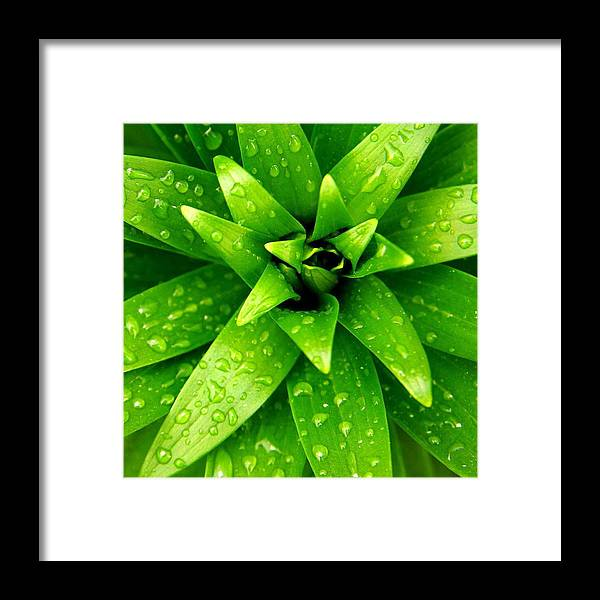 Floral Framed Print featuring the photograph Green by Aza Johnson