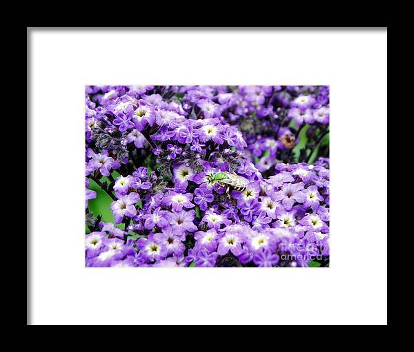 Green Bee Framed Print featuring the photograph Green Bee Tiny Pollinator by Renee Croushore