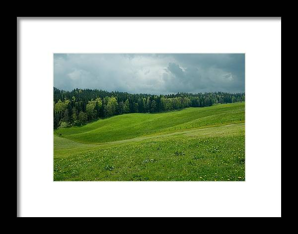 Meadow Framed Print featuring the photograph Green Everywhere by Hildie Hofmann