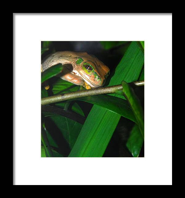 Framed Print featuring the photograph Green Eye'd Frog by Optical Playground By MP Ray