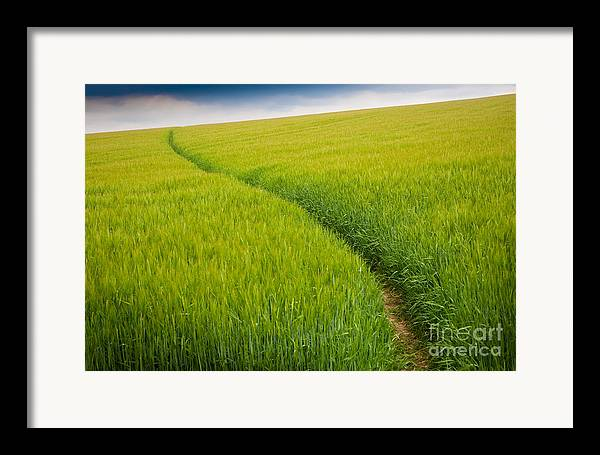Photograph Framed Print featuring the photograph Green Field by Michael Hudson
