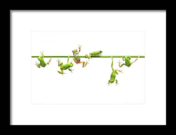 Hanging Framed Print featuring the photograph Green Flogs Each Other Freely On Stem by Yuji Sakai