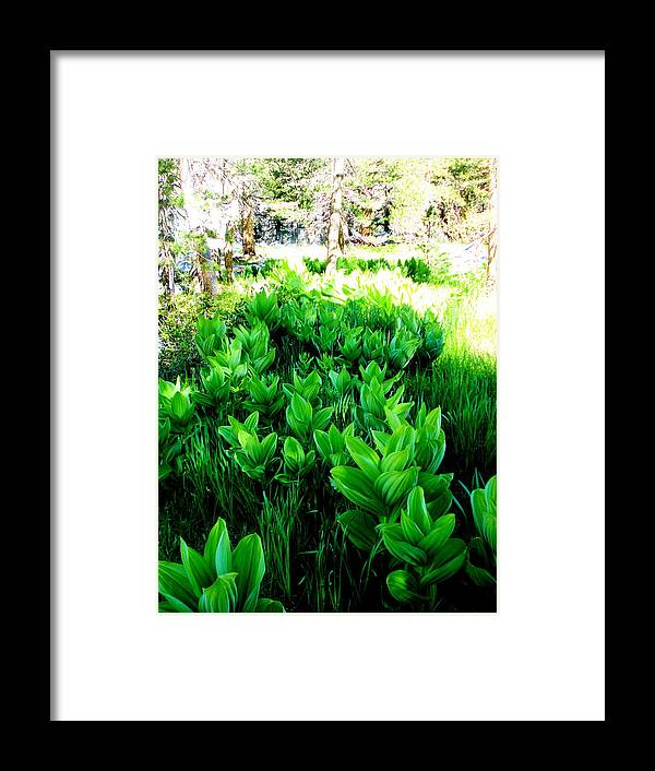 Nature Framed Print featuring the photograph Green Flowers by Azadeh Sarvi
