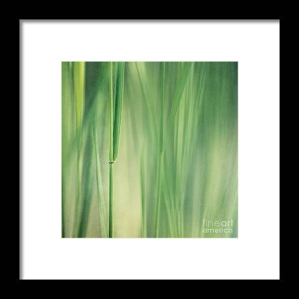 Grass Framed Print featuring the photograph Green Grass by Priska Wettstein
