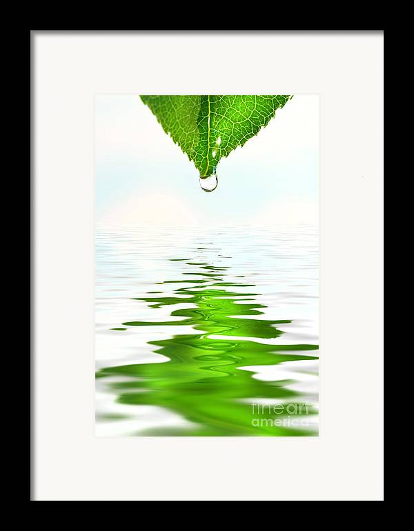 Background Framed Print featuring the photograph Green Leaf Over Water Reflection by Sandra Cunningham