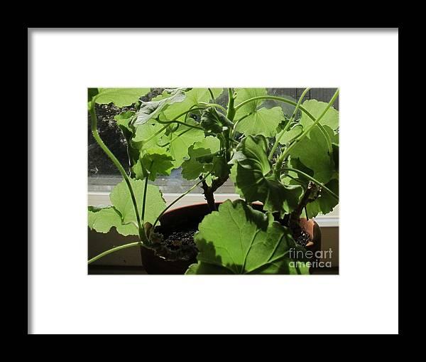 Green Framed Print featuring the photograph Green Light by Seija Talolahti