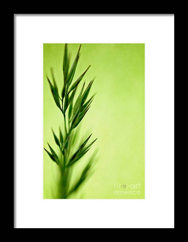 Green Framed Print featuring the photograph Green by Lois Bryan