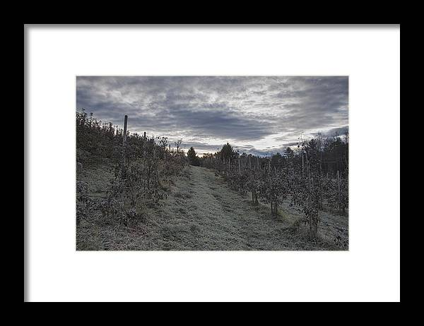 Green Mountain Orchards Putney Vermont Framed Print featuring the photograph Green Mountain Morning by Tom Singleton