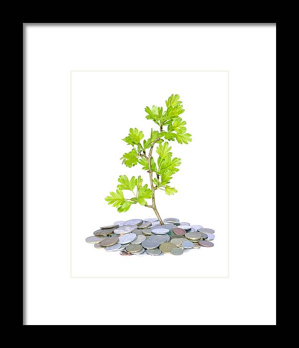 Aspiration Framed Print featuring the photograph Green Plant And Money by Ioan Panaite