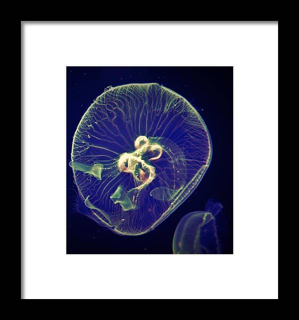Jelly Fish Framed Print featuring the photograph Green Power by Sabasion Bentley-Dyess