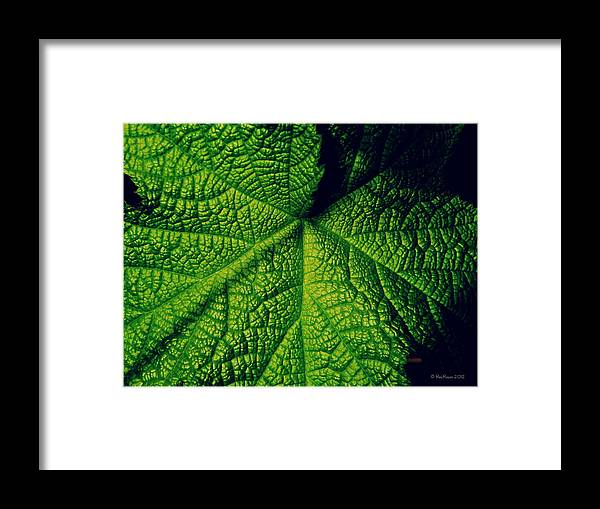 Leaf Framed Print featuring the photograph Green Ribbons Of Life by Roe Rader
