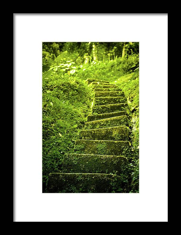 Tropical Rainforest Framed Print featuring the photograph Green Stair by Pixalot