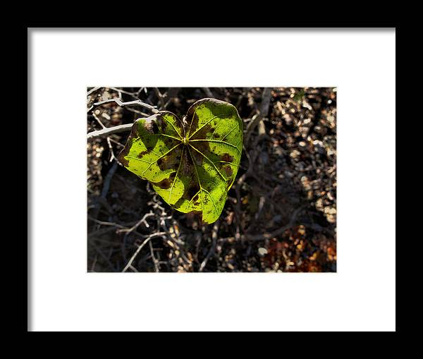 Leaf Framed Print featuring the photograph Greenleafcomp 2009 by Glenn Bautista