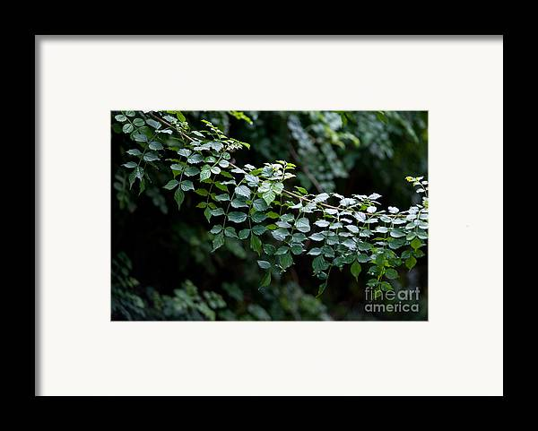 Green Framed Print featuring the photograph Greens by Dan Holm