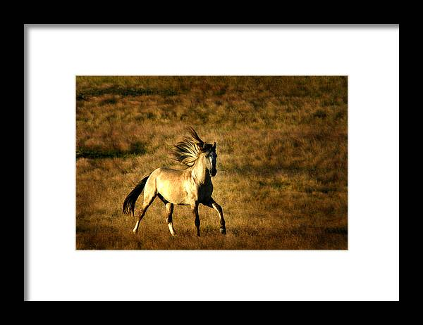 Grey Eagle Framed Print featuring the photograph Grey Eagle by Lourie Zipf
