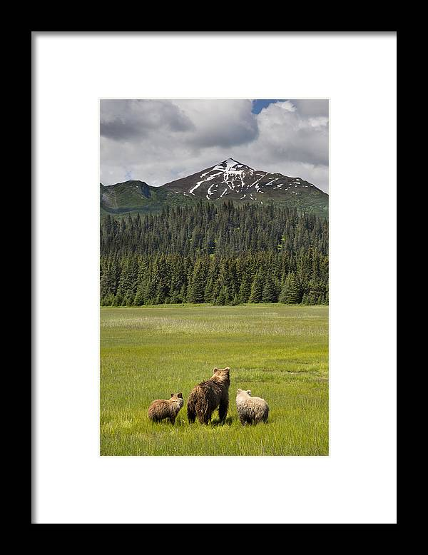 Richard Garvey-williams Framed Print featuring the photograph Grizzly Bear Mother And Cubs In Meadow by Richard Garvey-Williams